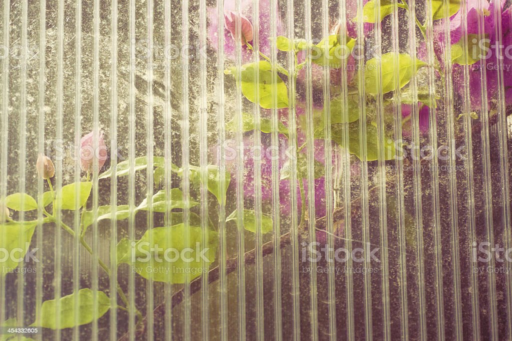 Bougainvillea flowers through window royalty-free stock photo