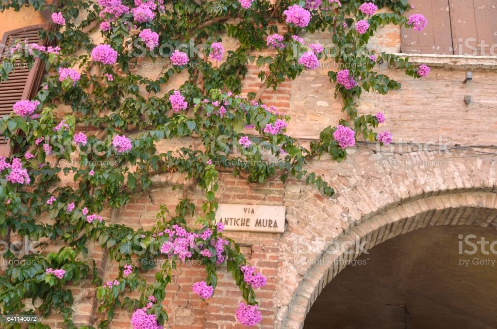 Bougainvillea  over a brick arch in the village of Sirmione, Italy. stock photo