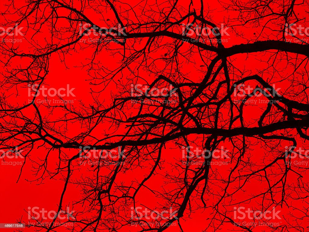 bough and twigs in red back stock photo
