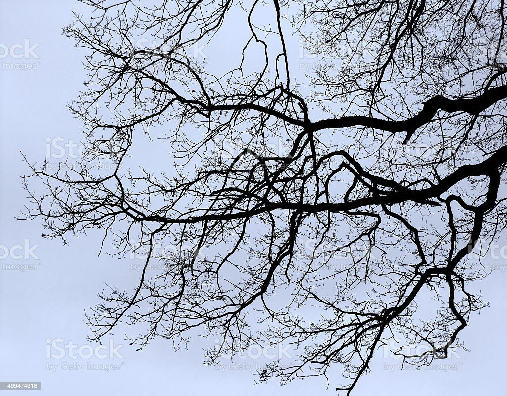 bough and twigs stock photo