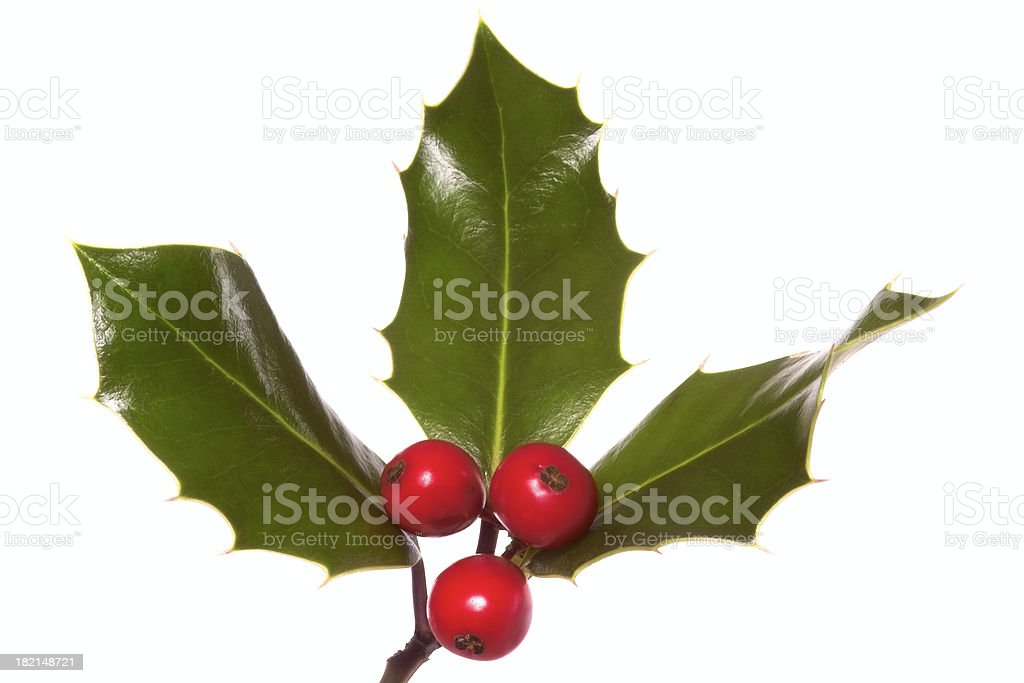 Boughs of Holly royalty-free stock photo