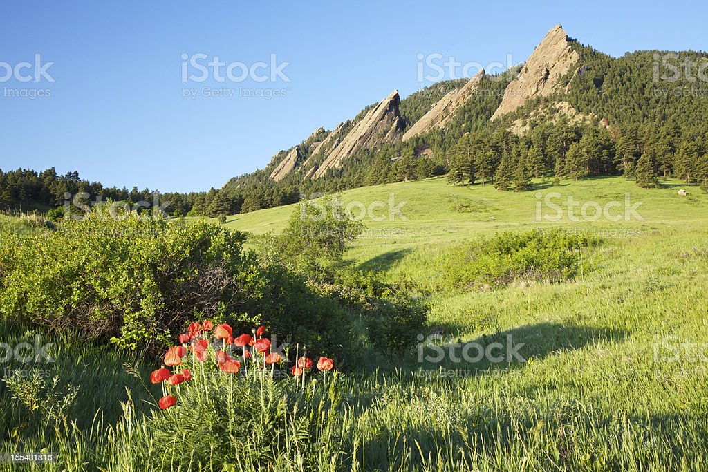Boulder Colorado Flatirons and Poppies royalty-free stock photo