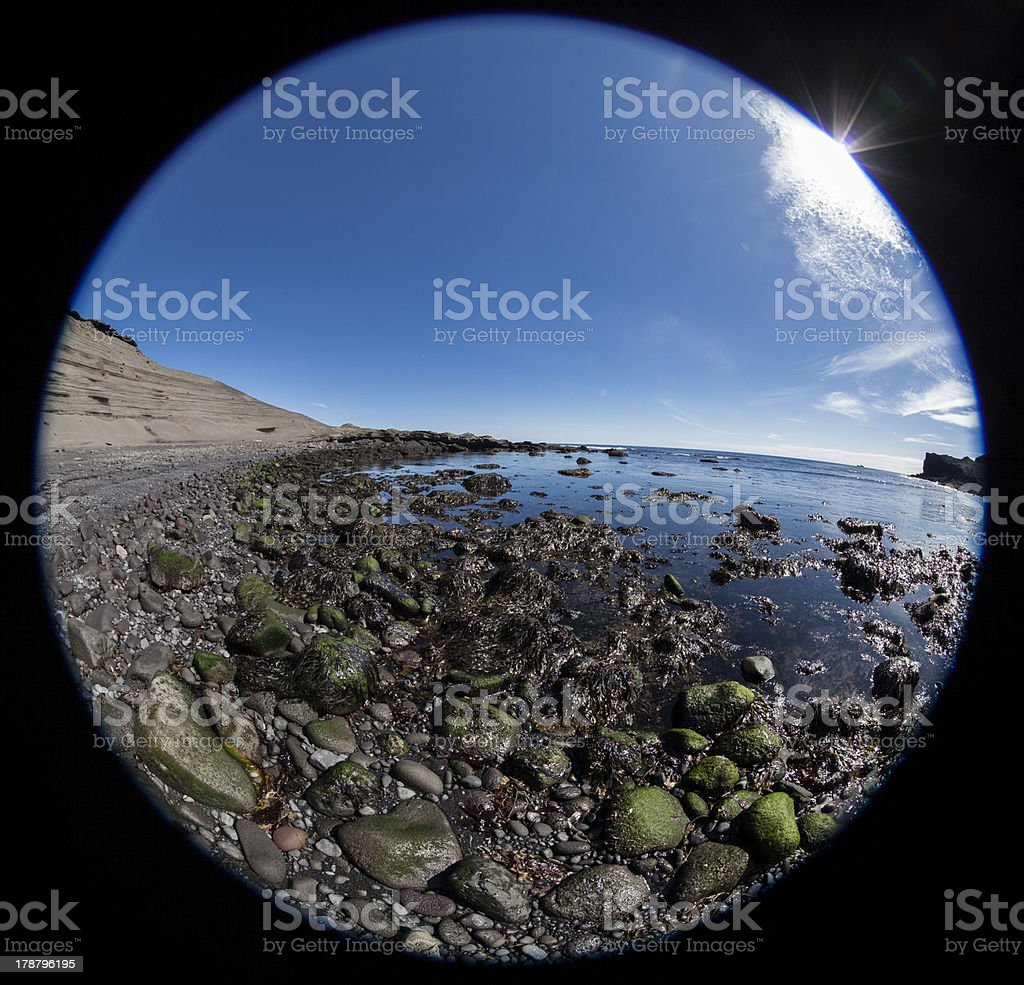 Boulder covered with algae royalty-free stock photo