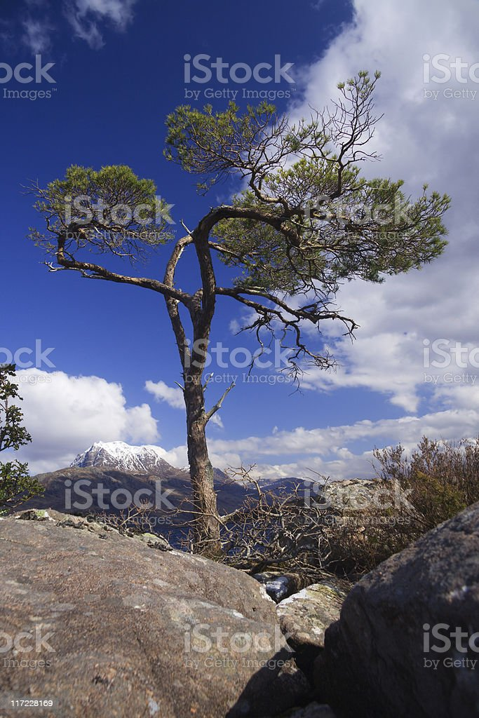 boulder tree stock photo