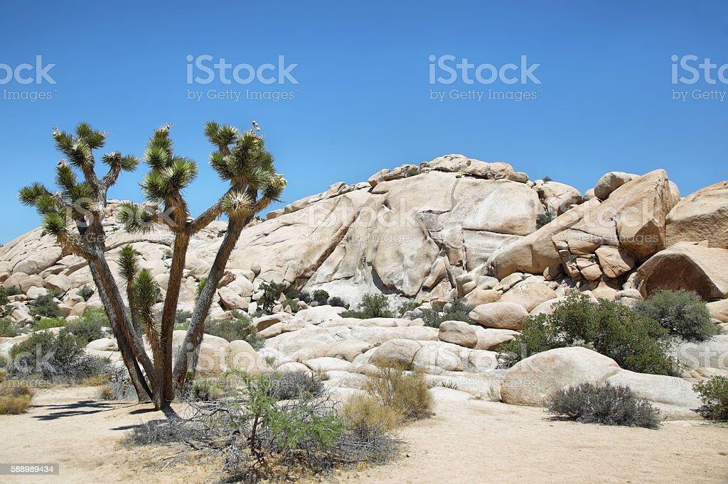 Boulders and joshua tree in Joshua Tree National Park stock photo