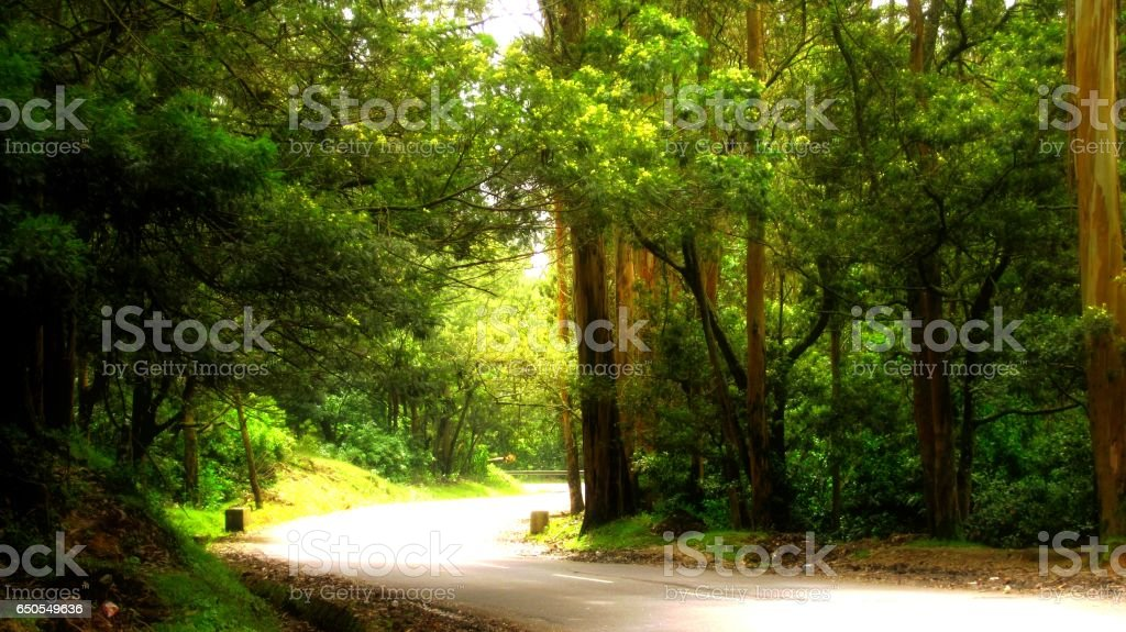 Boulevard in the Nilgiris stock photo
