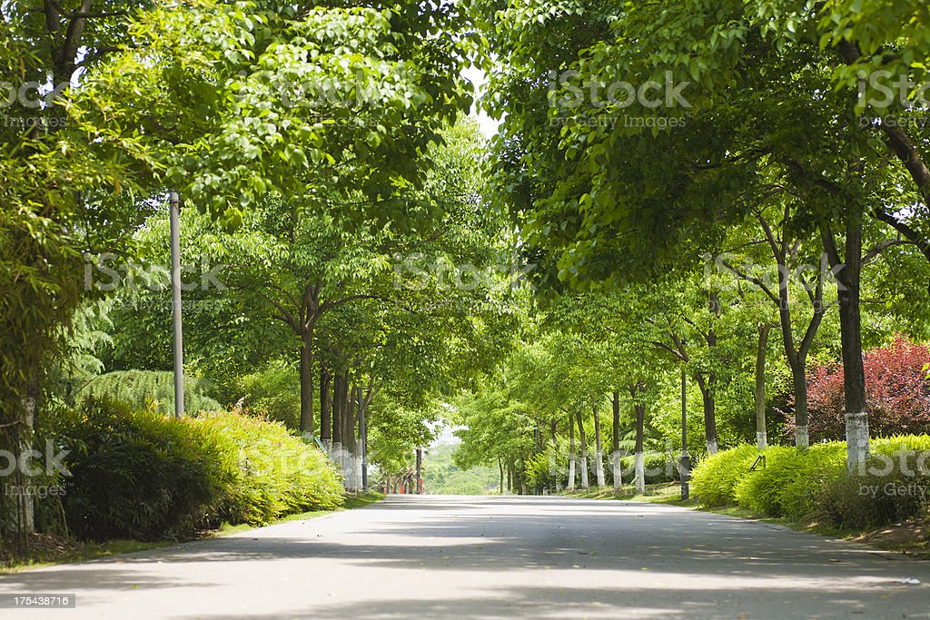 boulevard royalty-free stock photo