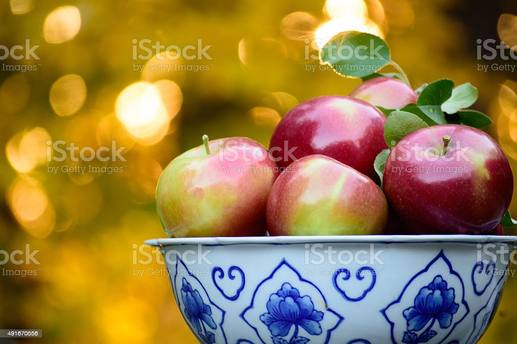 Bountiful Apple Harvest Early Fall stock photo