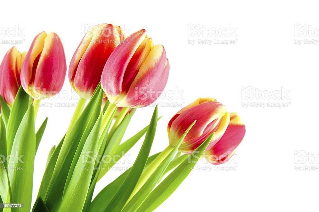Bouquet de tulipes jaunes rouge photo libre de droits