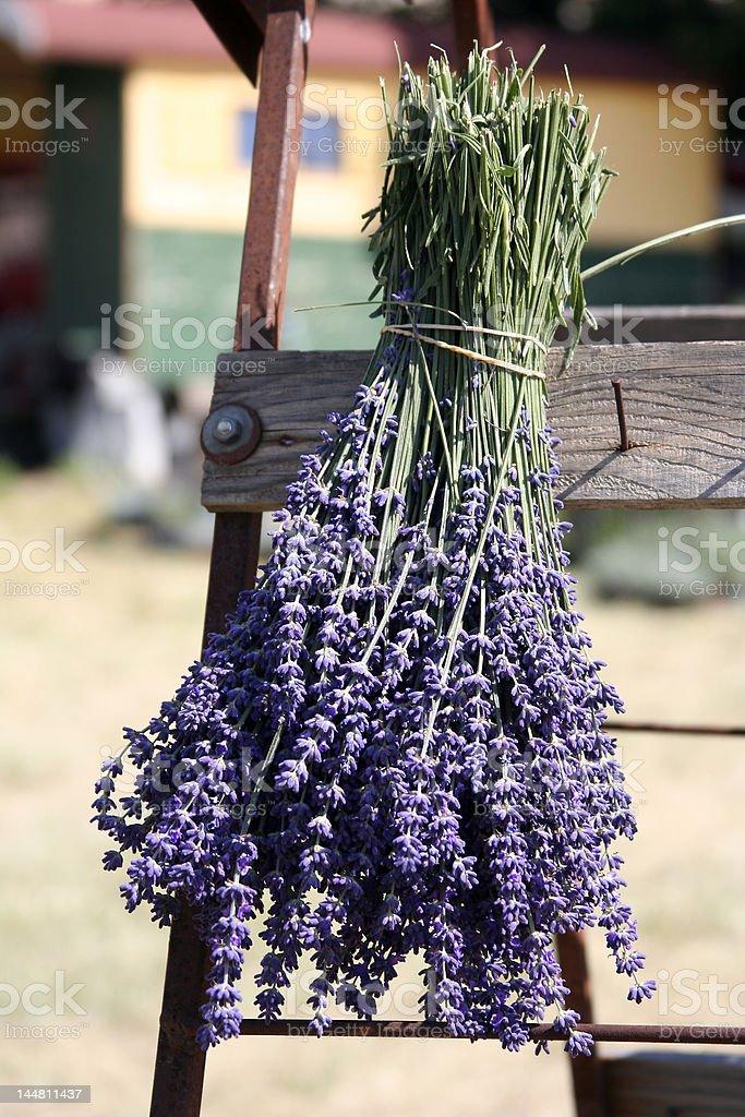 Bouquet de lavande sur un s?choir royalty-free stock photo