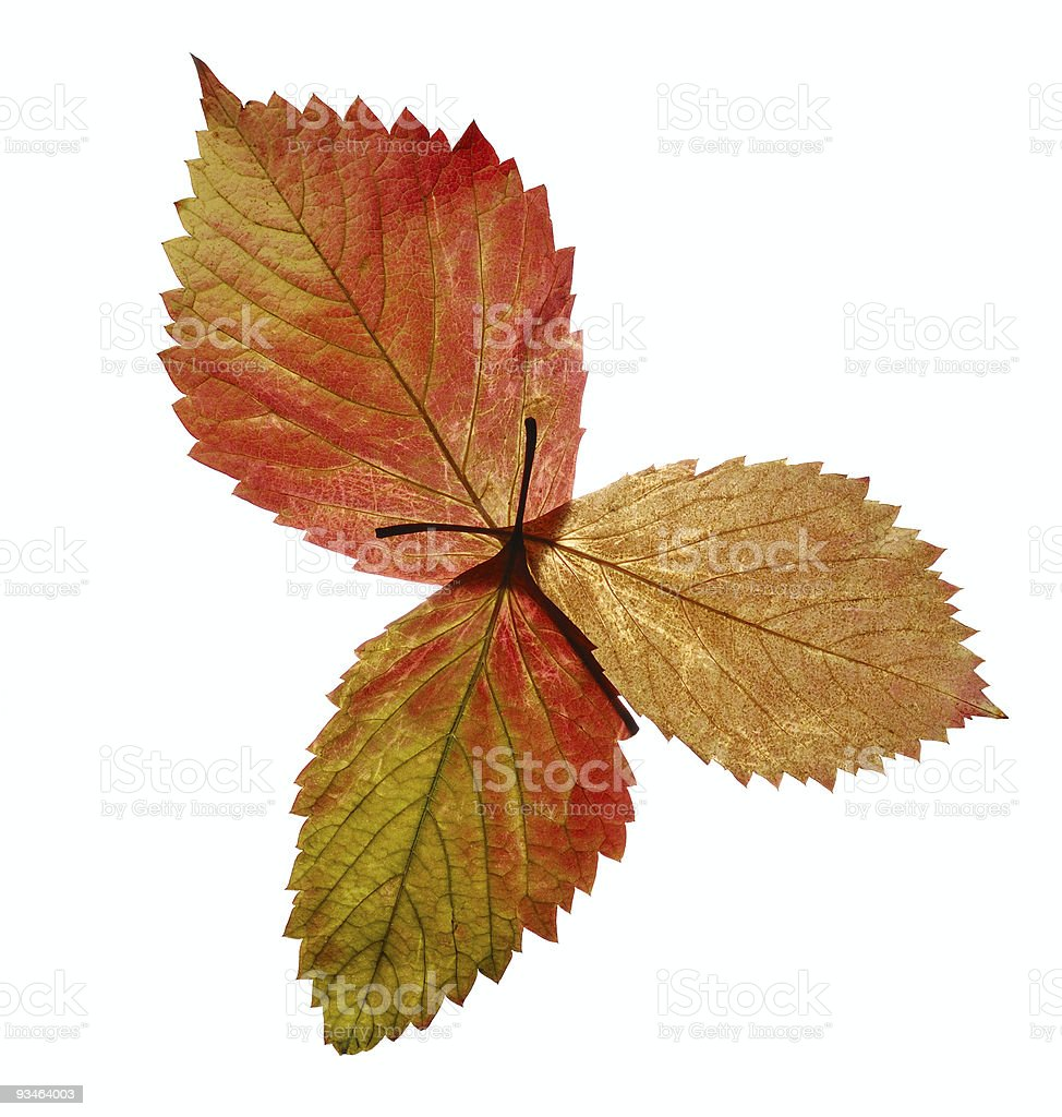 Bouquet from autumn leaves royalty-free stock photo