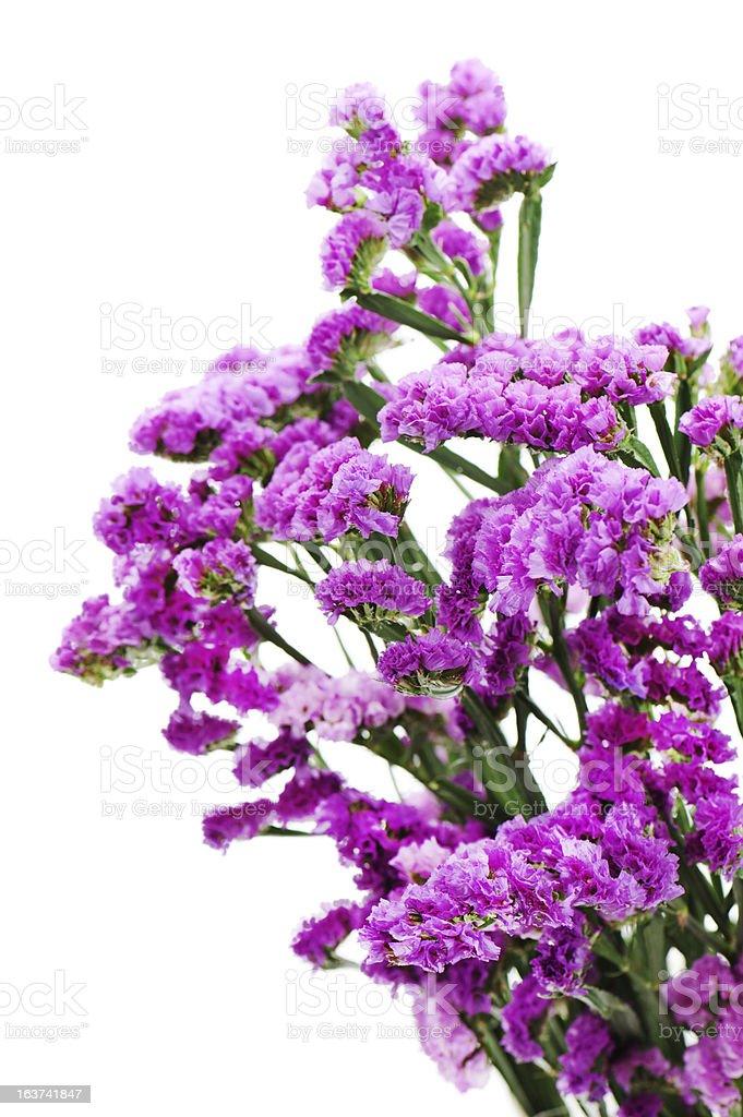 Bouquet from purple statice flowers arrangement centerpiece royalty-free stock photo