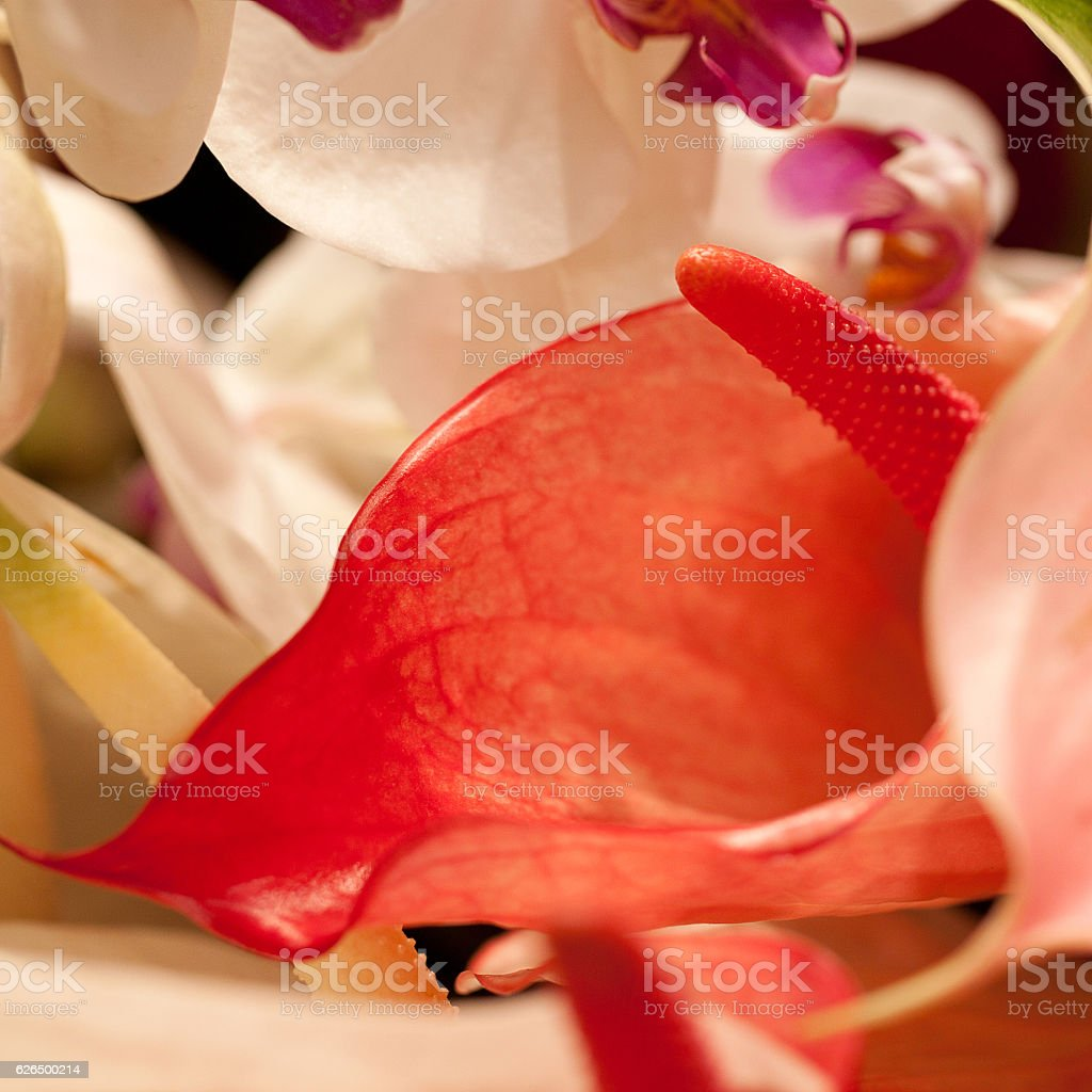 bouquet of anthurium and orchids stock photo