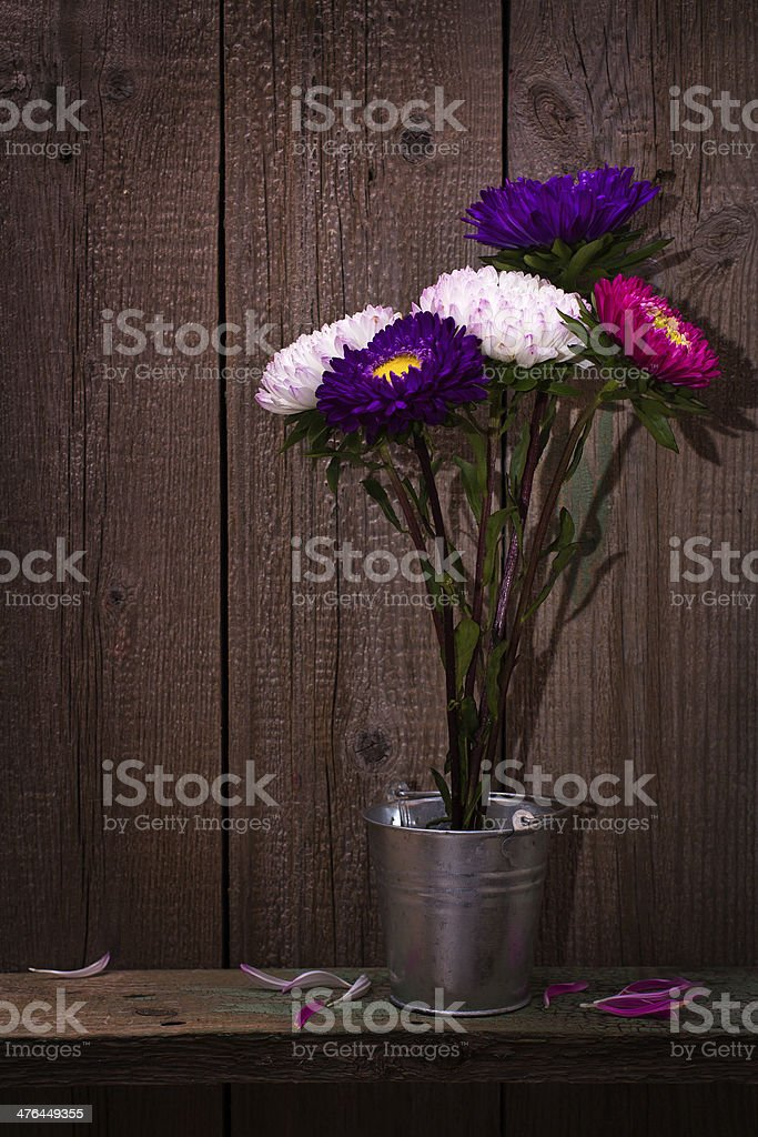 Bouquet of asters flowers royalty-free stock photo