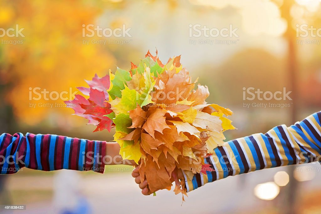 Bouquet of autumn red and orange leaves in child hand stock photo
