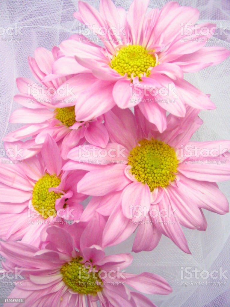 Bouquet Of Beauties stock photo