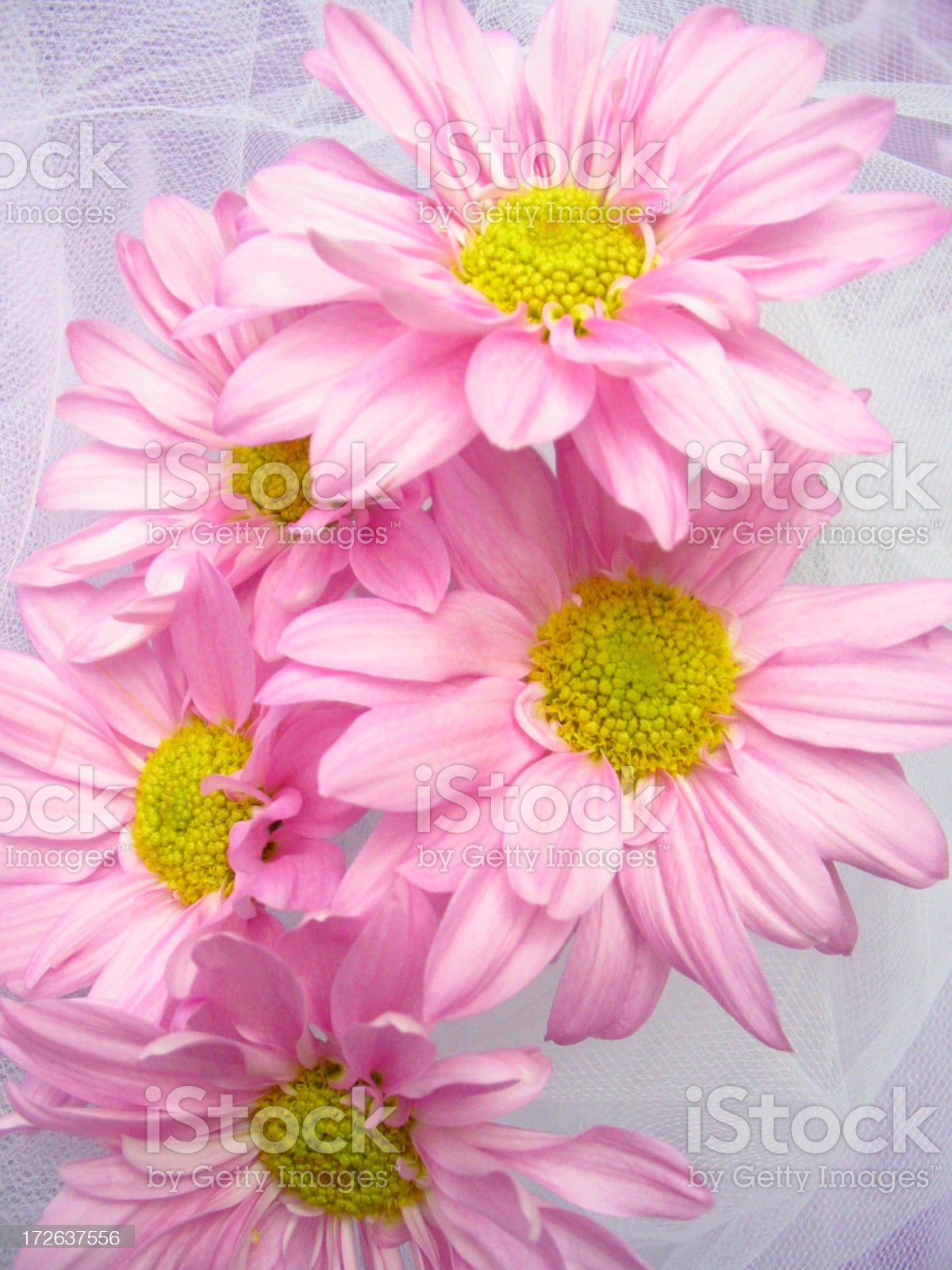 Bouquet Of Beauties royalty-free stock photo