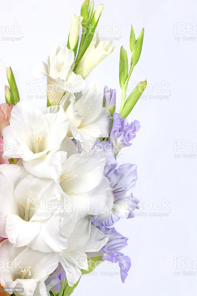 Bouquet of beautiful colorful gladioli royalty-free stock photo