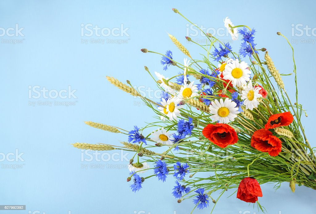 Bouquet of beautiful flowers (Cornflowers, chamomiles wheat and stock photo