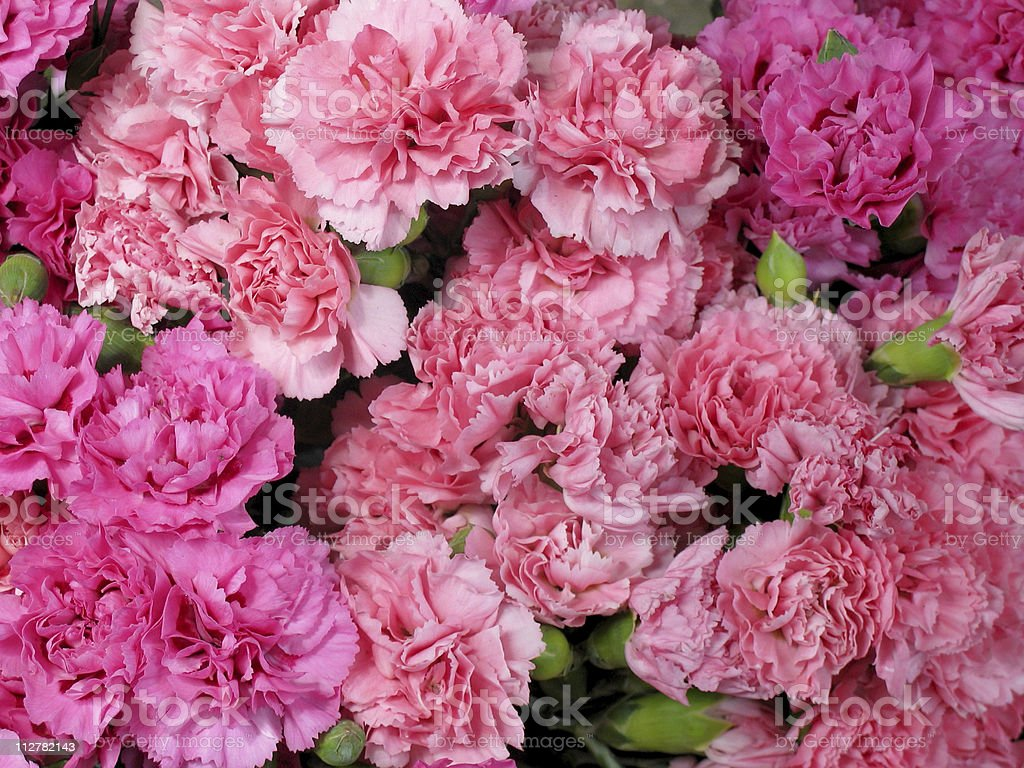 Bouquet of beautiful pink carnations close-up. stock photo