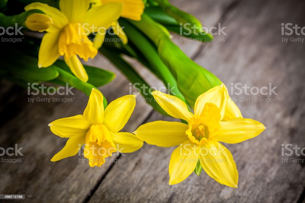 bouquet of bright yellow daffodils closeup on rustic wooden background stock photo