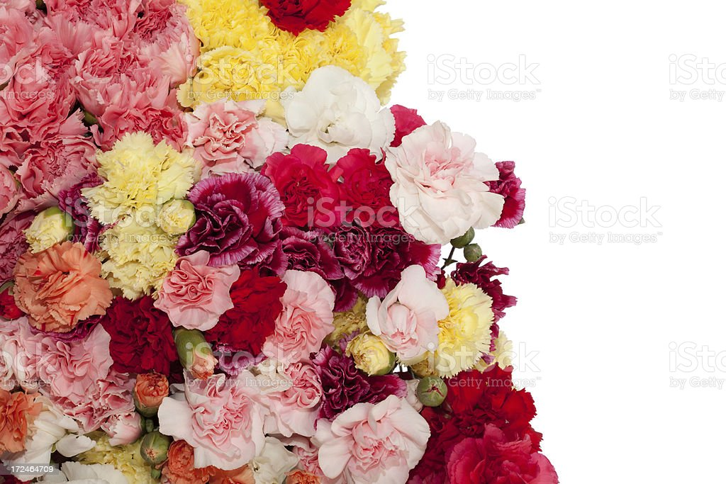 Bouquet of carnations on white background royalty-free stock photo