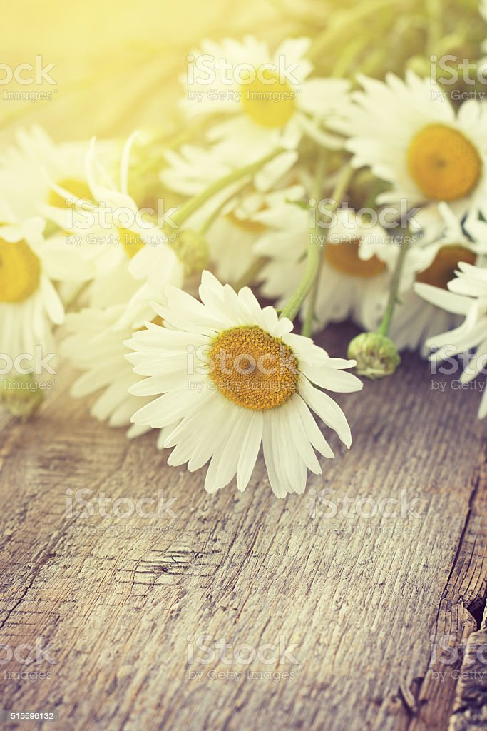 bouquet of chamomile  (toning, instagram filter) stock photo