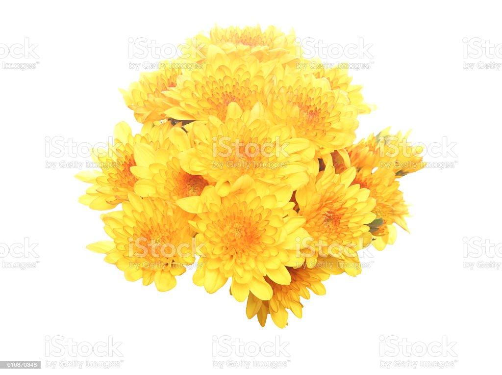 Bouquet of chrysanthemum stock photo