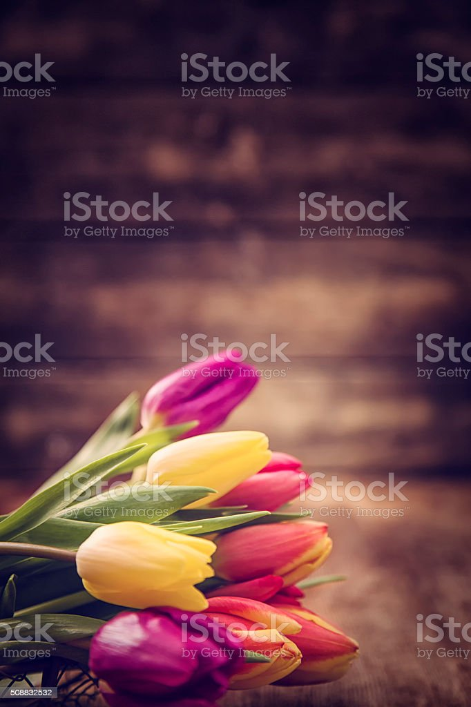 Bouquet of Colofurl Spring Tulips stock photo
