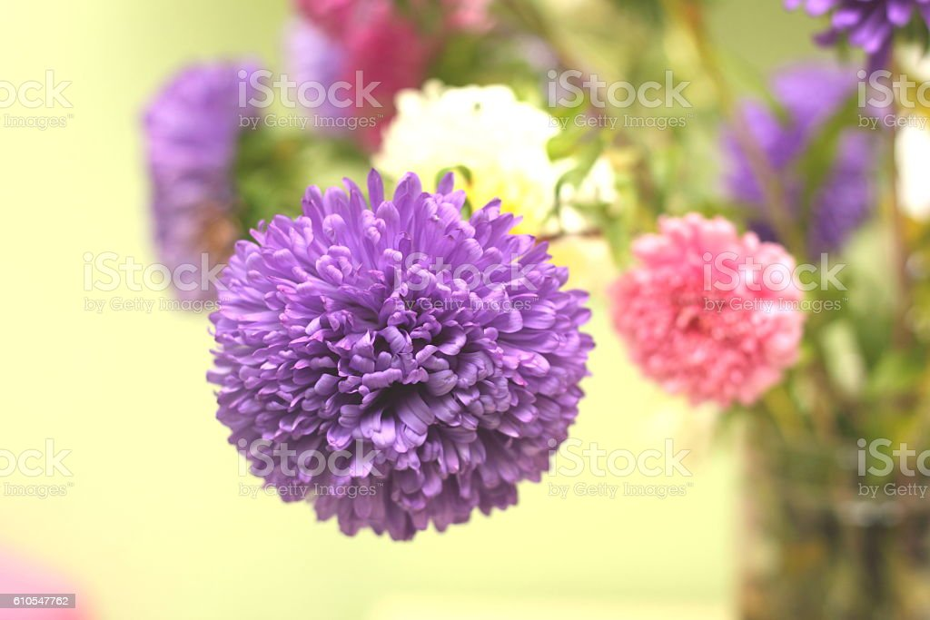 Bouquet of colorful flowers on yellow background closeup stock photo