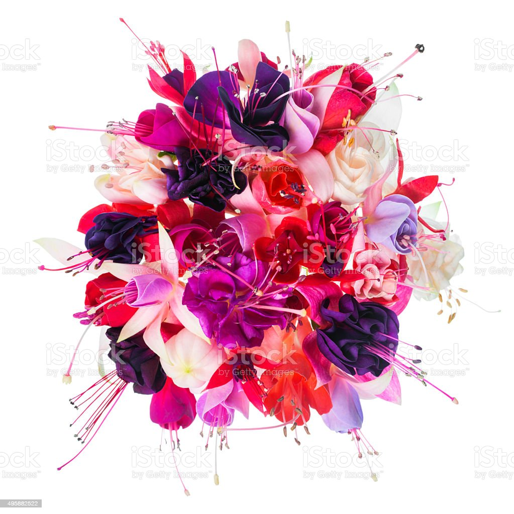 bouquet of colorful fuchsia flowers is isolated on white stock photo