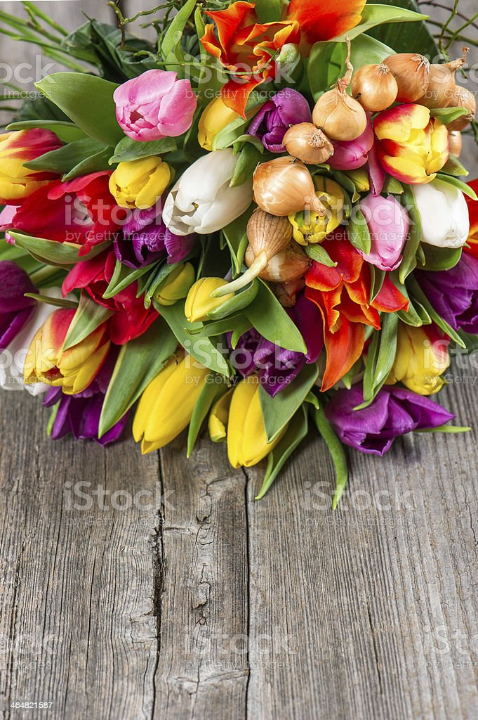 bouquet of colorful tulips over wooden background royalty-free stock photo