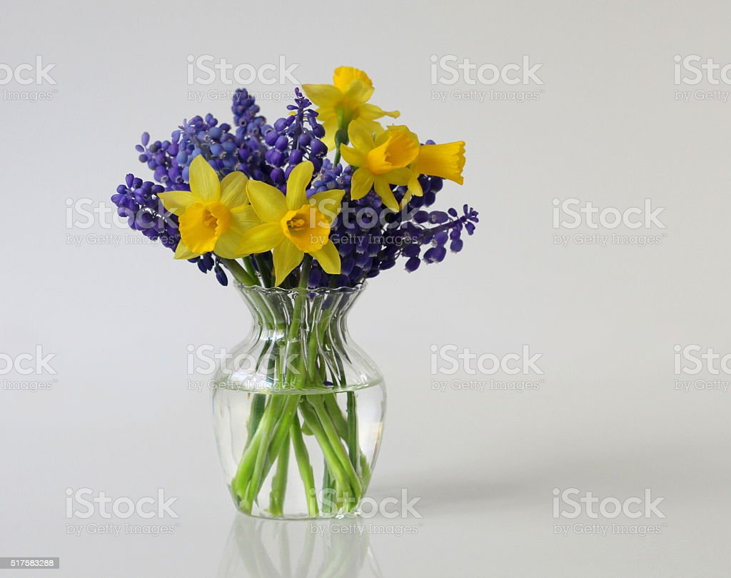 Bouquet of daffodils and grape hyacinth flowers narcissus and bouquet of daffodils and grape hyacinth flowers narcissus and muscari royalty free stock dhlflorist Choice Image
