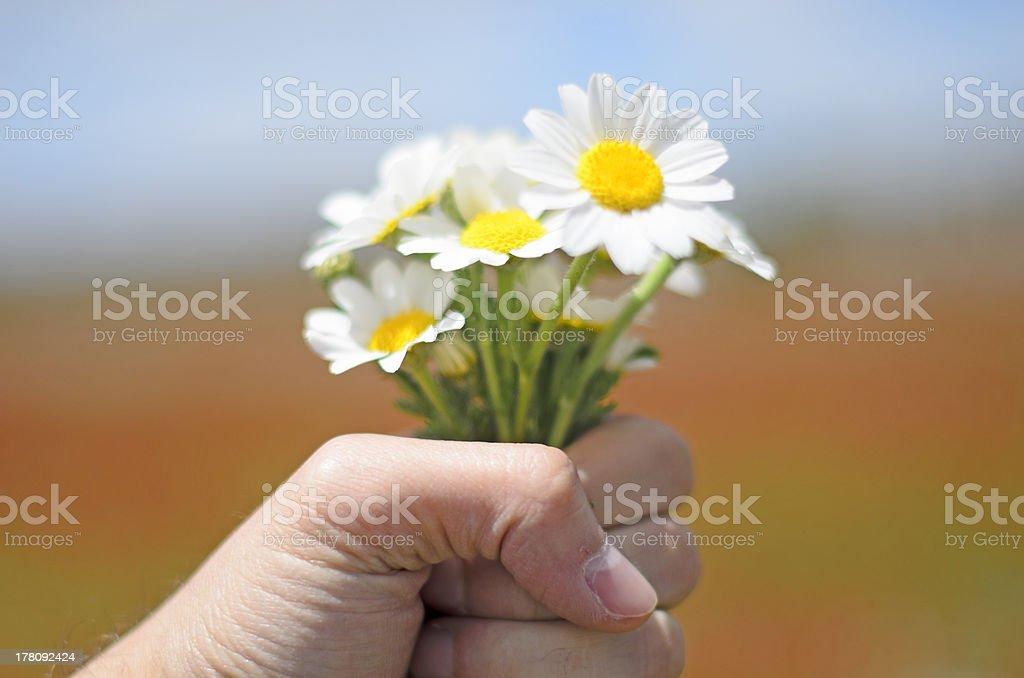 Bouquet de pâquerettes photo libre de droits