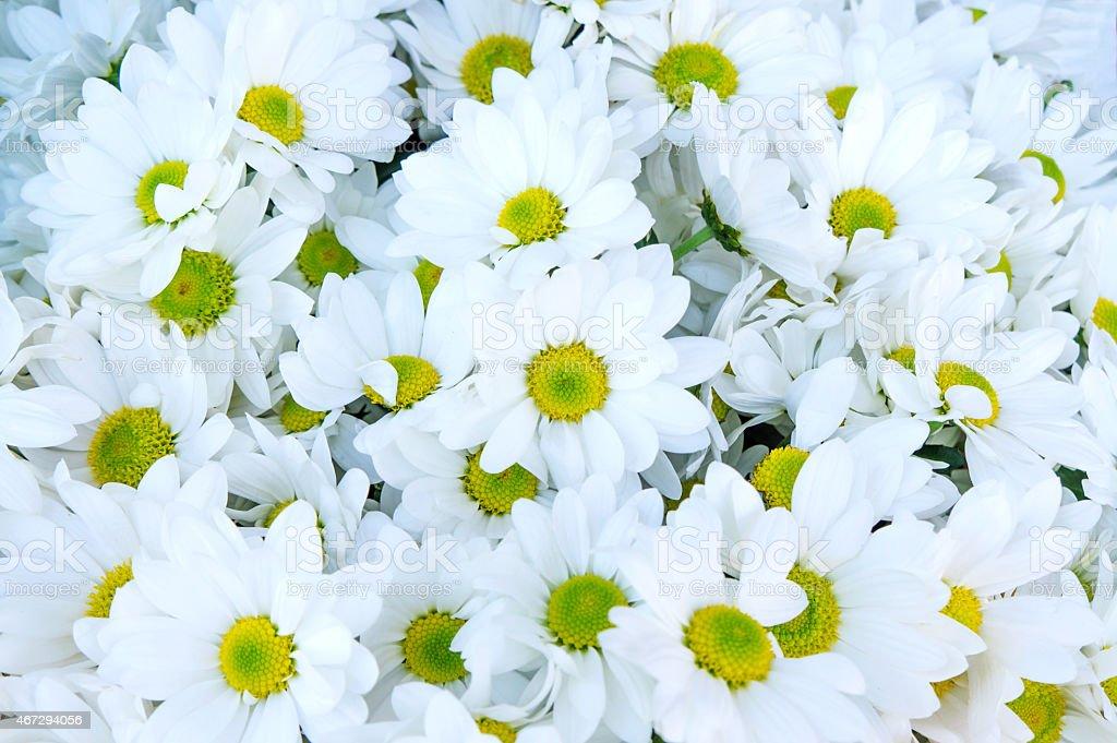 꽃다발 국화와 royalty-free 스톡 사진