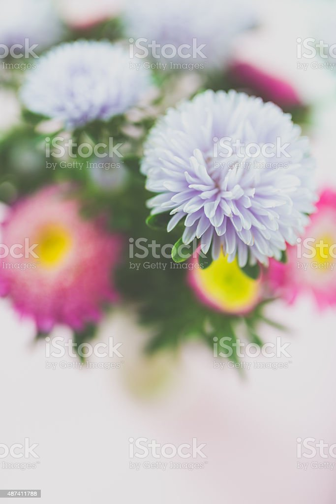 Bouquet of daisies stock photo