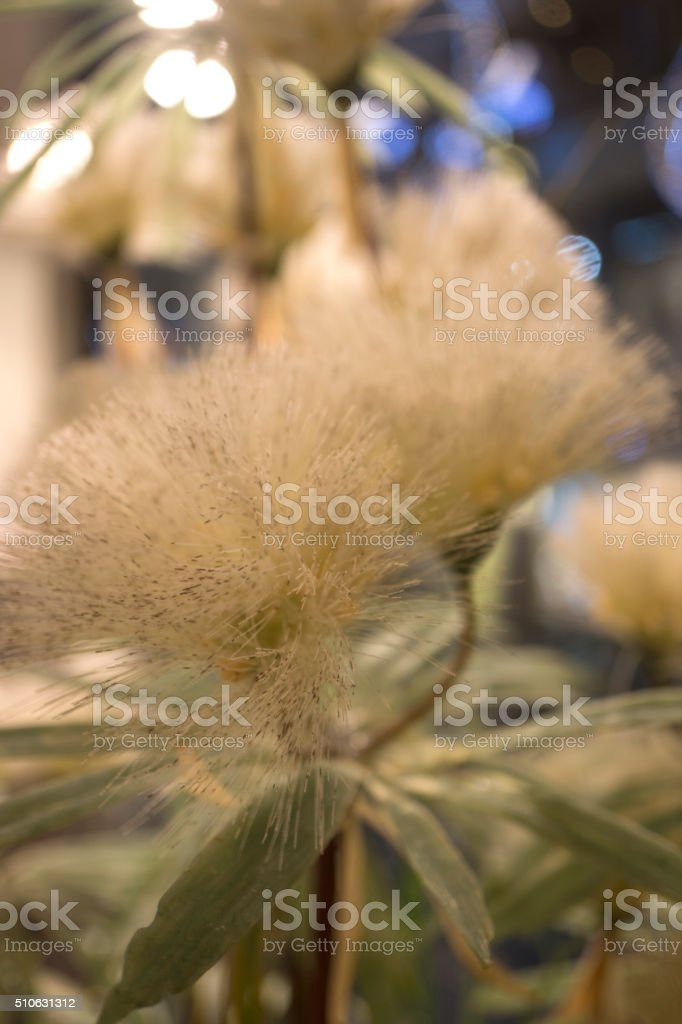 Bouquet of dandelions stock photo