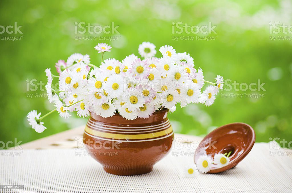 Bouquet of delicate daisies in a pot at the table royalty-free stock photo