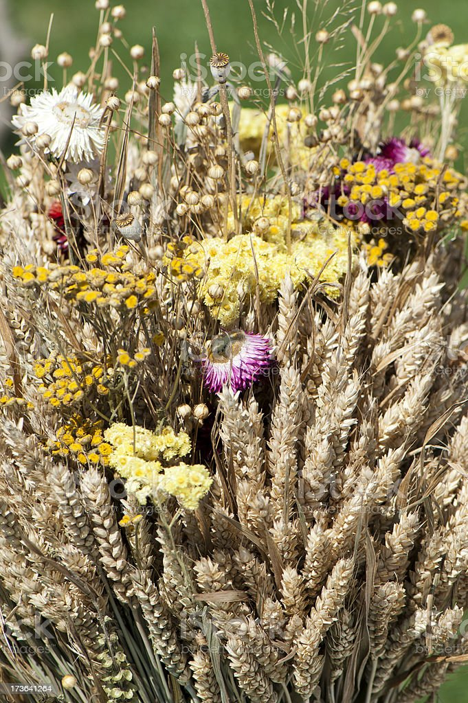 Bouquet of dried flowers royalty-free stock photo