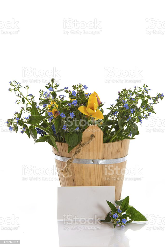 bouquet of early spring flowers royalty-free stock photo