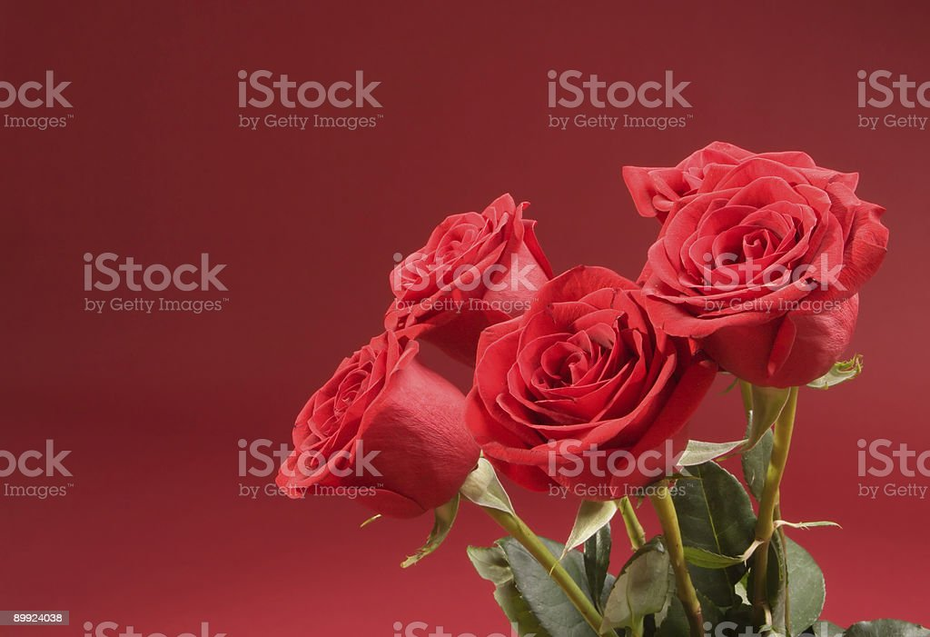 Bouquet of five roses on the red background royalty-free stock photo