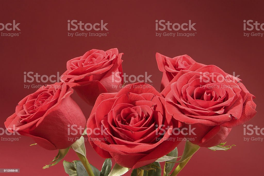 Bouquet of five roses royalty-free stock photo