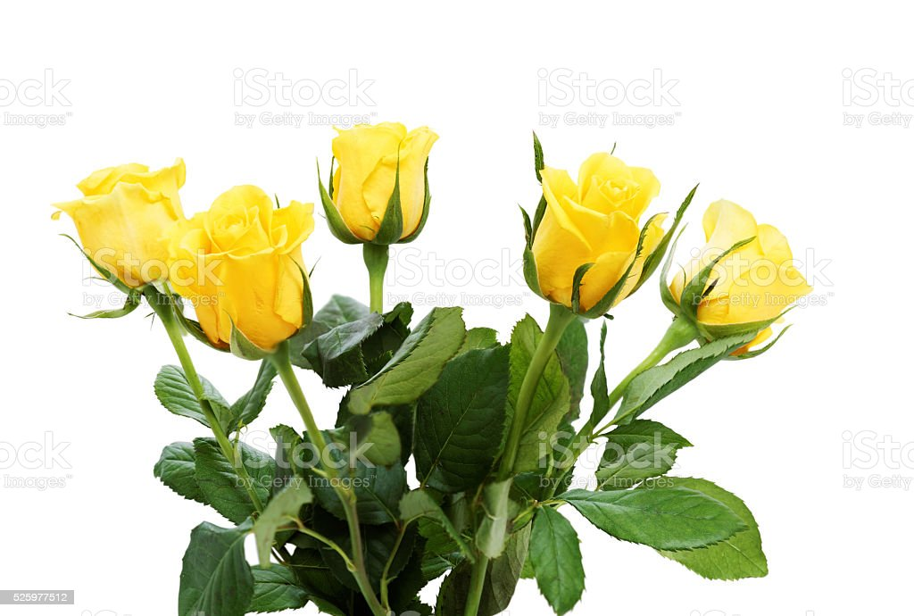 Bouquet of five yellow roses stock photo
