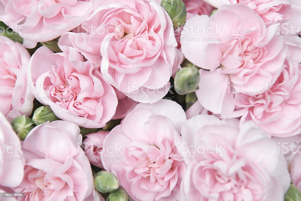 Bouquet of Fresh Pink Peonies stock photo