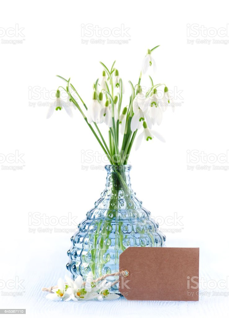 bouquet of fresh snowdrops flowers in a glass vase and a card on white background, vertical stock photo