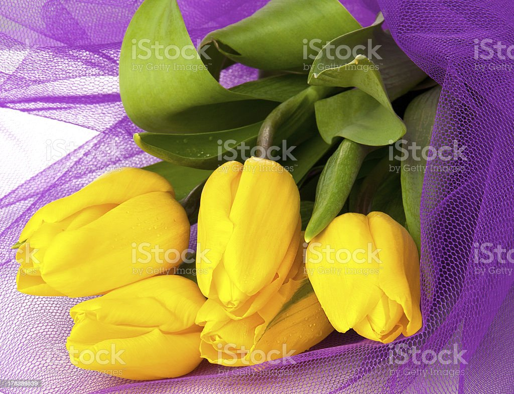 Bouquet of fresh  tulip flowers withviolet grid on white background royalty-free stock photo