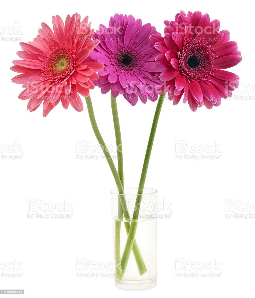Blumenstrauß von Gerber in einem Glas Lizenzfreies stock-foto