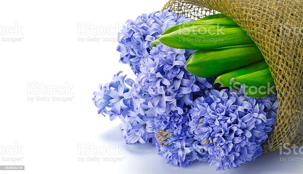 Bouquet of hyacinths royalty-free stock photo