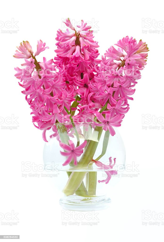 bouquet of hyacinths stock photo