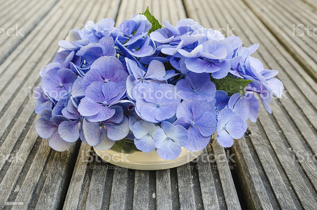 Bouquet of hydrangea on rustic wood royalty-free stock photo